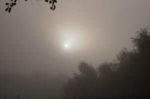 Auch wenn ich im Nebel stehe, das Licht bahnt sich seinen Weg