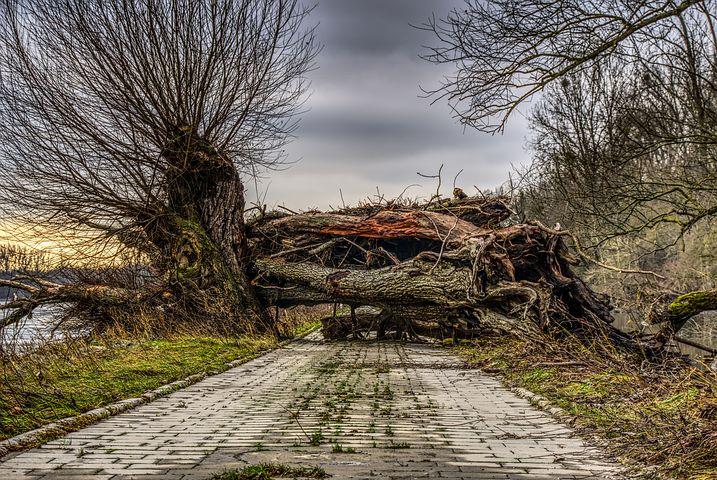 Baum fällt …!