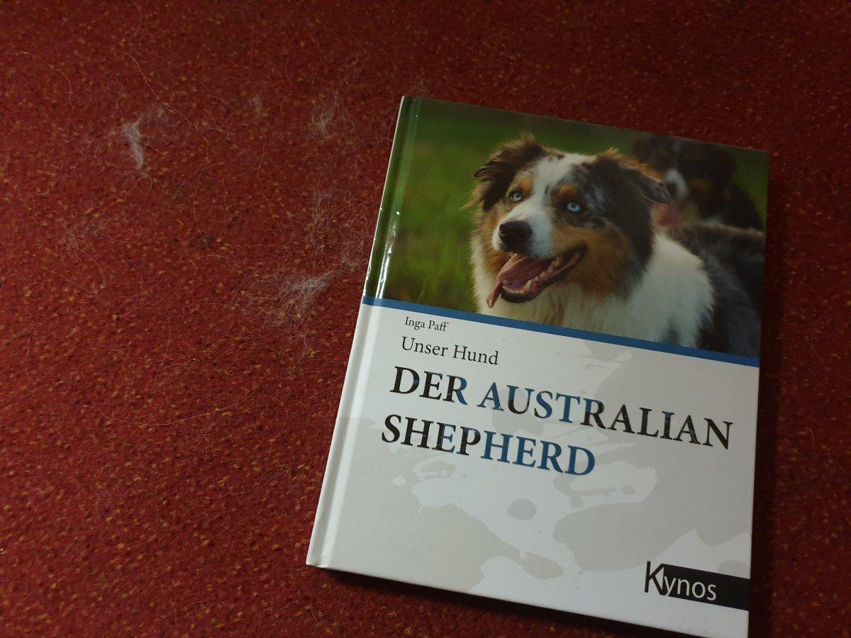 Tag 9 -Der AustralianShepherd